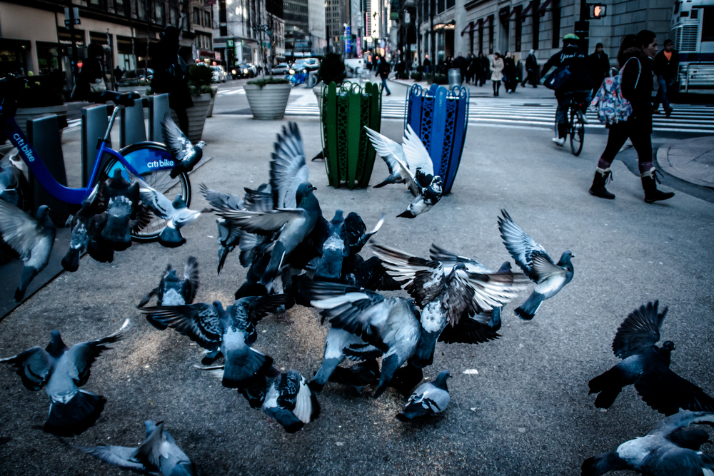 BIRDS SCATTER