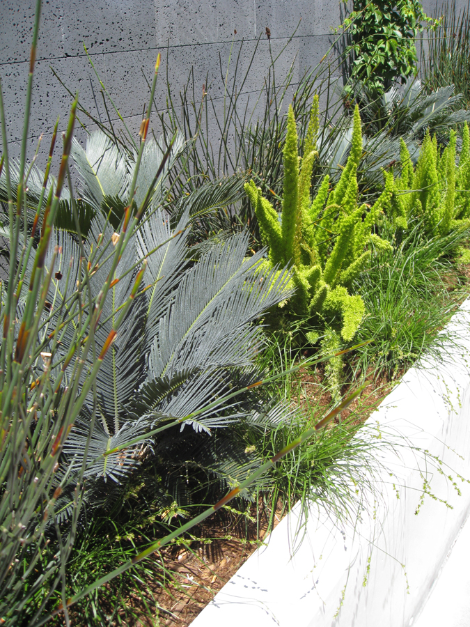 sfmoma-roof-plantings.jpg