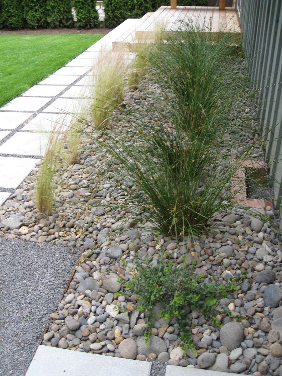 ne99-grasses.jpg