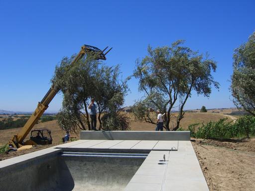 olive-tree-place-2.jpg
