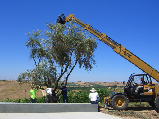 olive-tree-place.jpg