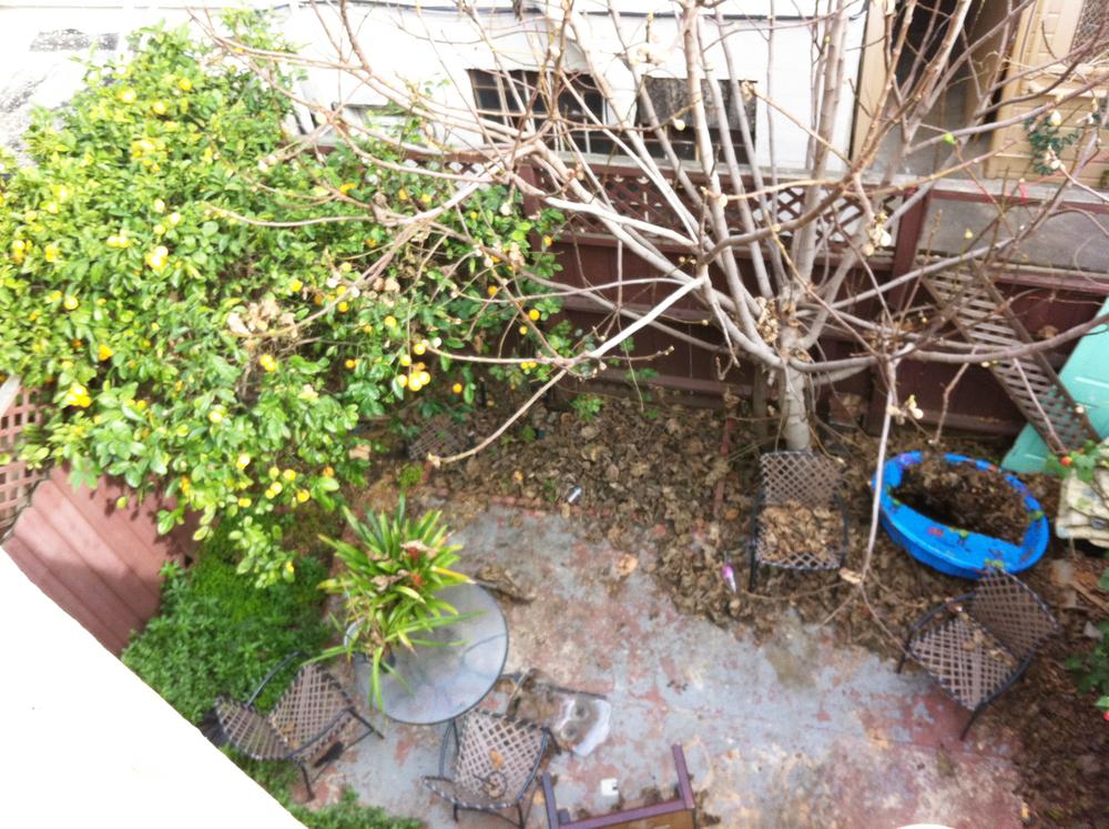 backyard-2.jpg