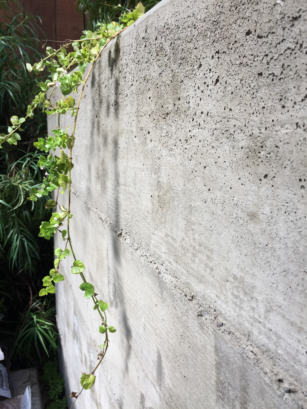TNS hayes valley concrete.jpg