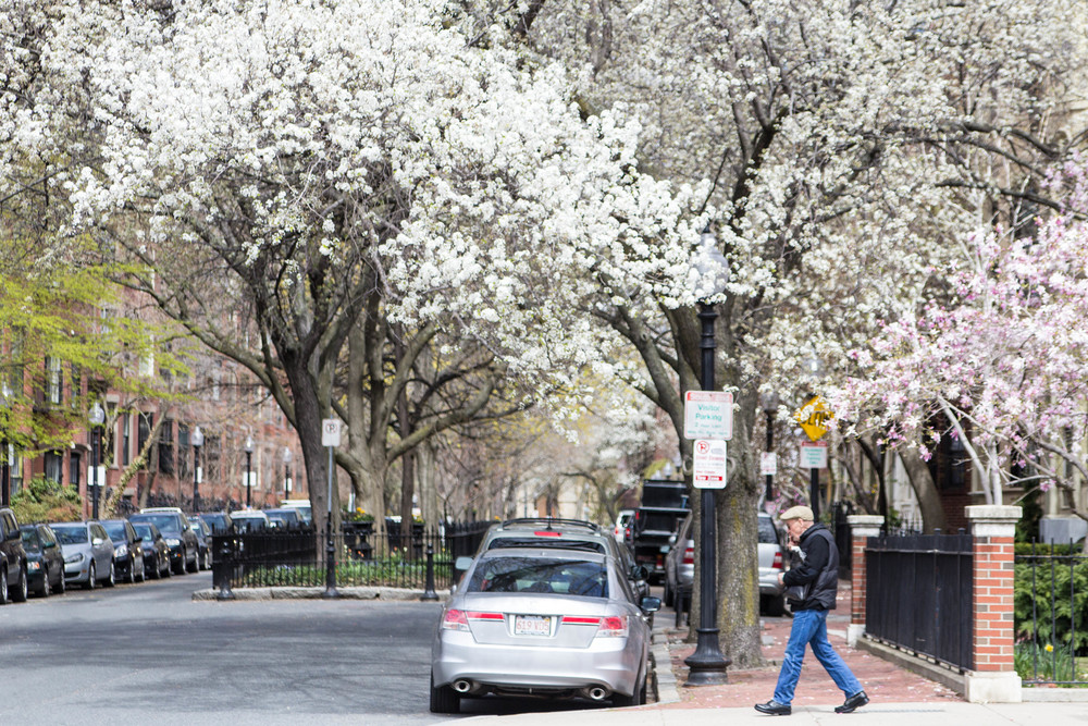 Spring in the South End, Boston