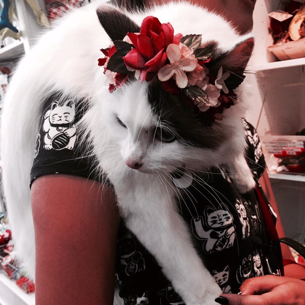bflowercat