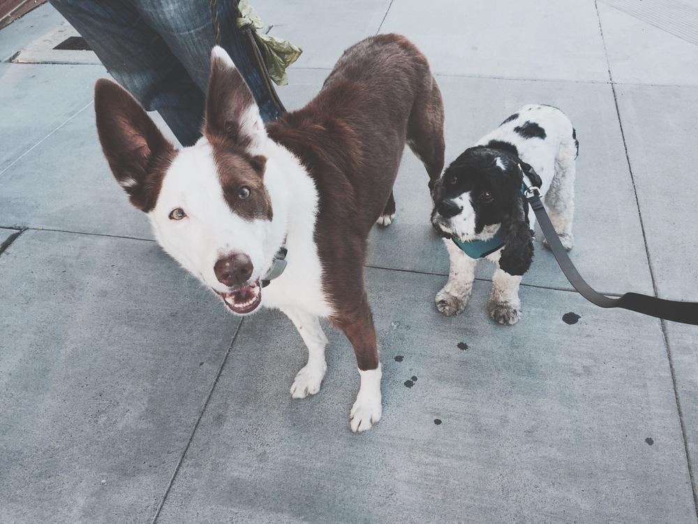 Angus and Bella!