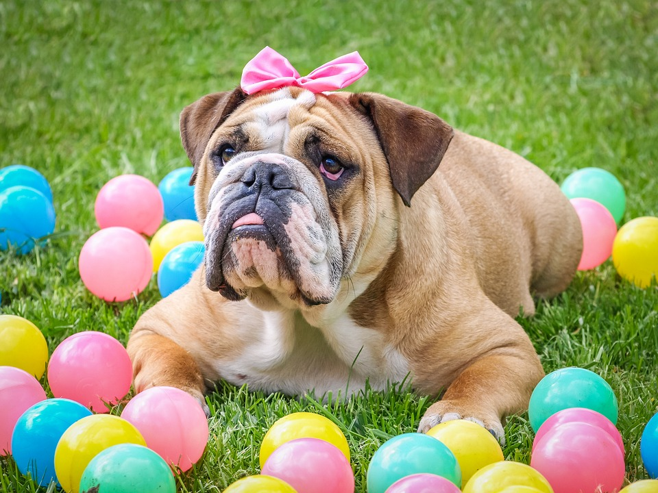 easterbulldog.jpg