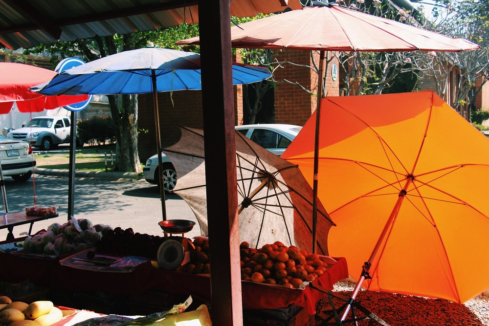 Umbrella entourage at the organic farmer's market. Chiang Mai, Thailand.