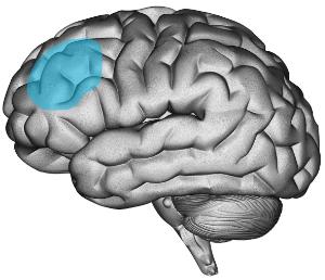 Dorso-lateral pre-frontal cortex