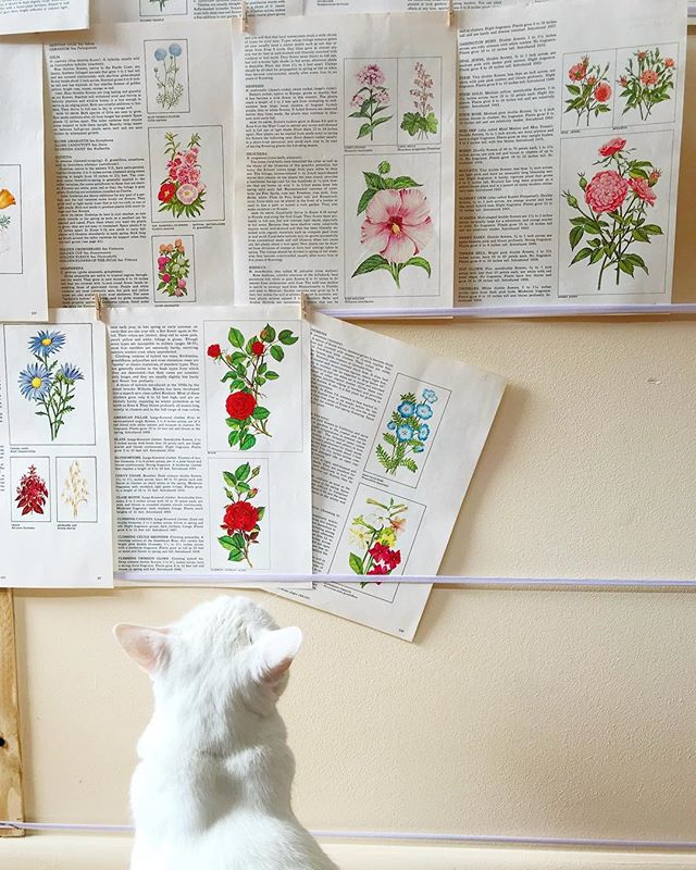 🌸💐🐱💐🌸 #olivesayshello checking out the #kittycatstevensstudio floral wall. I keep feeling guilty that my studio isn't unpacked, decorated, and ready for me to churn out handmade books yet. But I added up all the time I've spent out of Tennessee or traveling and I realized I've been gone for 1/5 of this year 🙀 I'm okay with being a turtle if it means I get to spend my rare free time with my husband, pets, and catching up with friends. Sure I'm itching to get creative, but sometimes 1) clearing out your land to put up a fence for the dog and 2) having deep conversations over margaritas are the top priorities 🤗✨ #noregrets #liveslow