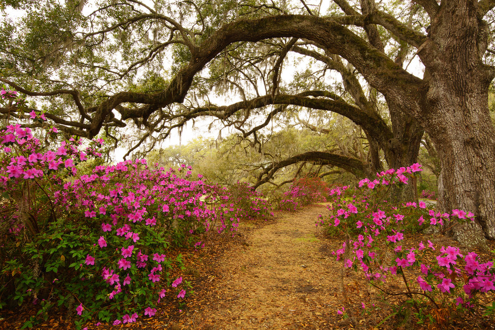 We were lucky the Azaleas bloomed early this year