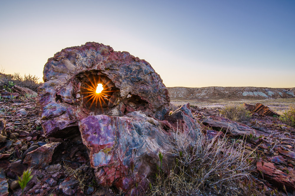 Sun through Petrified Log.jpg
