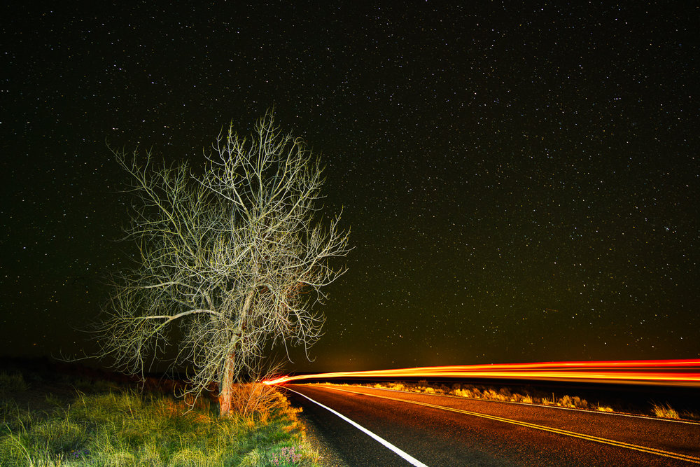 Lone Tree and Headlights.jpg