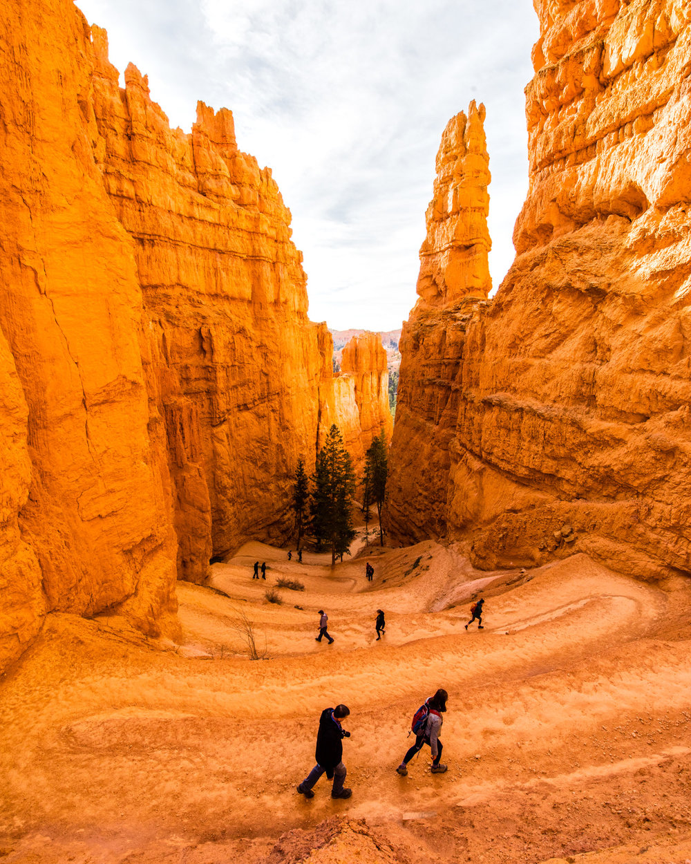 Descending Bryce © Allie Richards