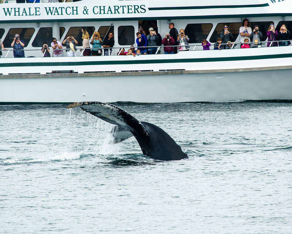 Whale and Charter.jpg
