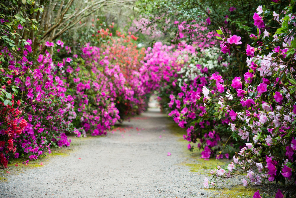 Charleston & Savannah - Azalea Season - March 27-30