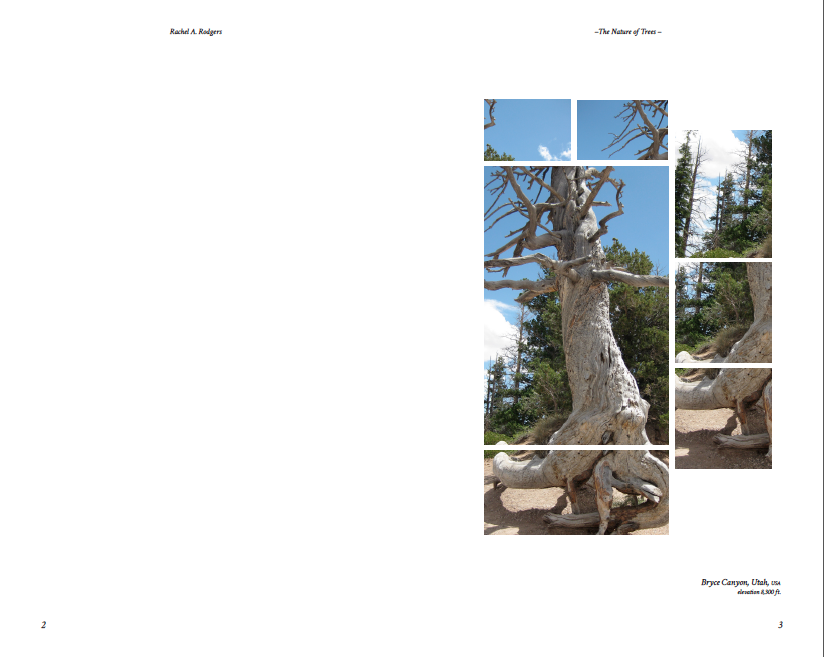 The Nature of Trees Pdfs-sample 2.png