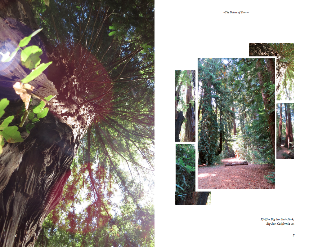 The Nature of Trees  I book design & photography
