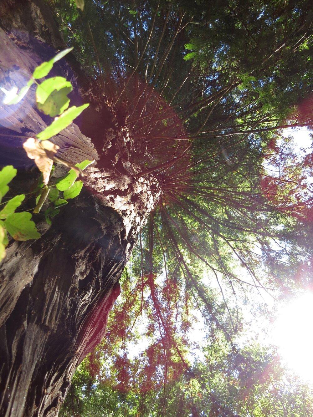 Pfeiffer Big Sur State Park, Big Sur, California, 2013