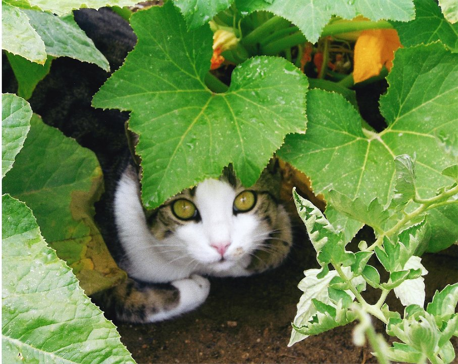 catunderbush1.jpg.jpg