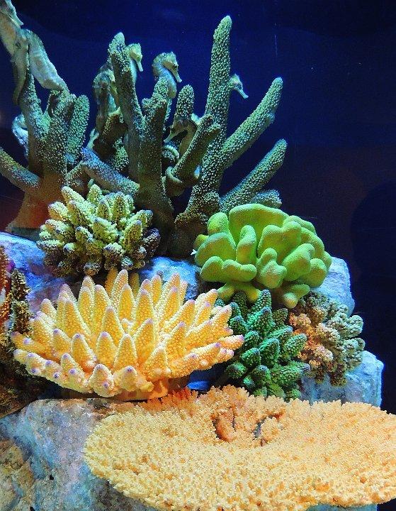 coralwithseahorses1.jpg.JPG