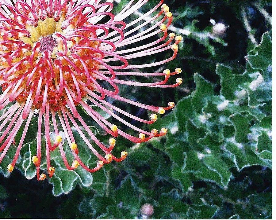 floralfirework1.jpg.jpg