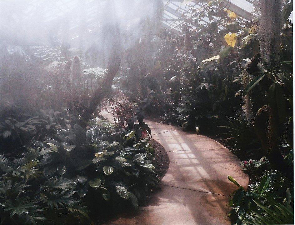 junglemist1.jpg.jpg