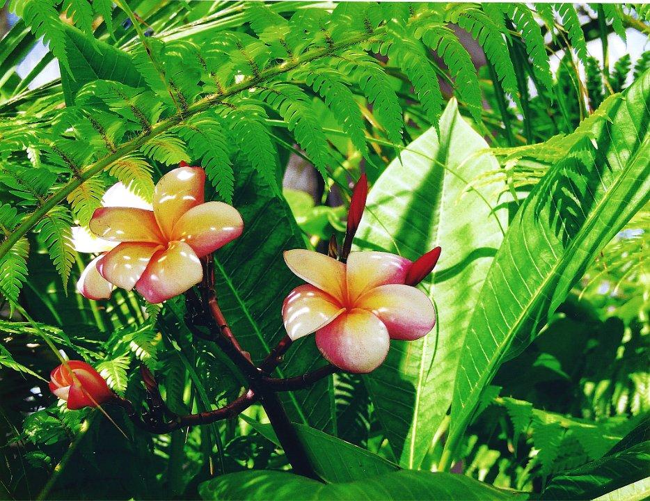 pinkandyellow blossom1.jpg.jpg