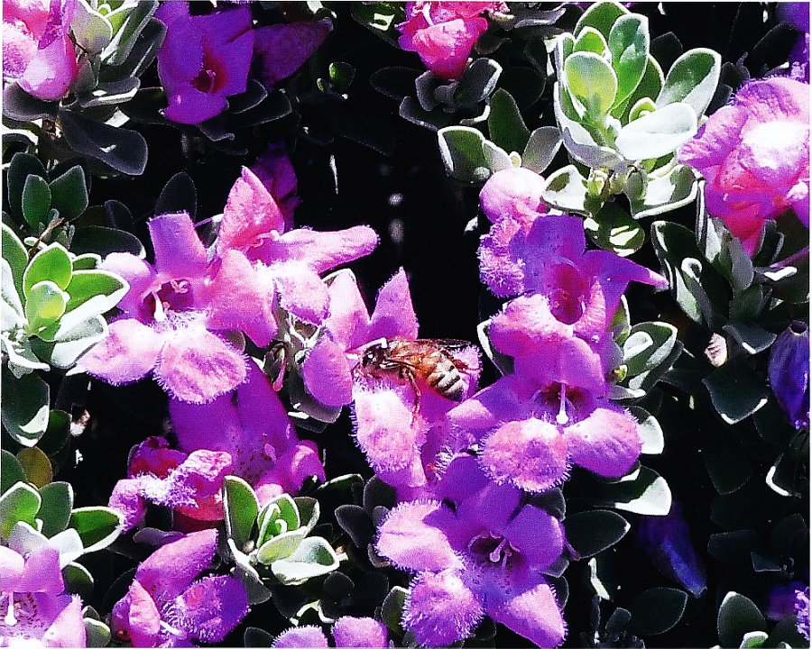 purpleflowers withbee1.jpg.jpg