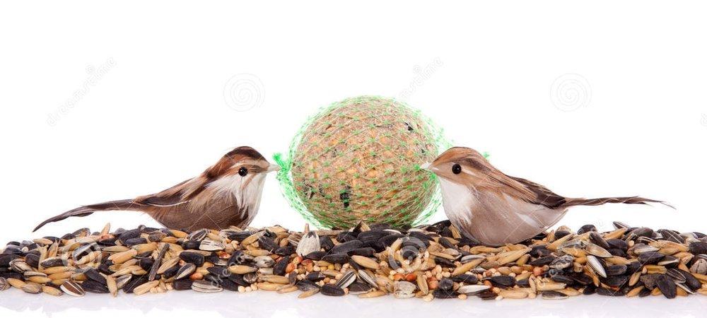canarian seed