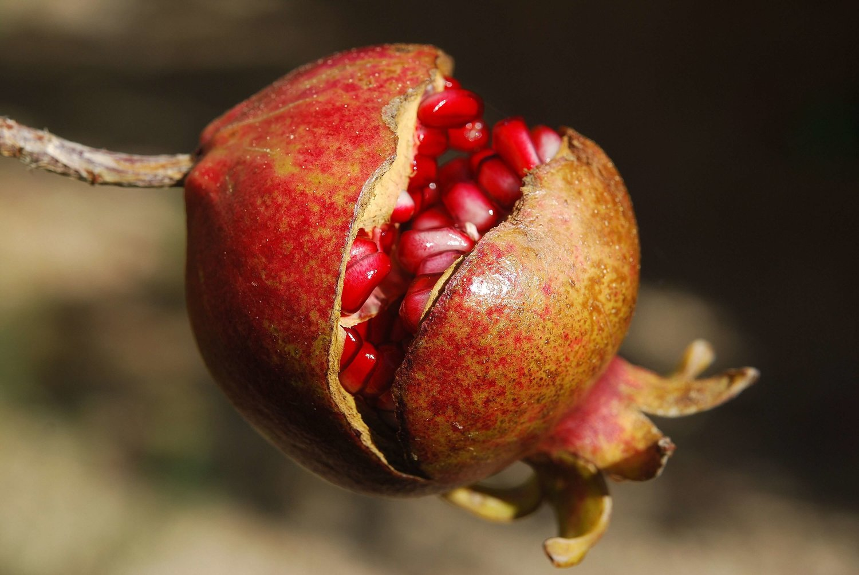 Netherlands Imports: Pomegranate-Garay