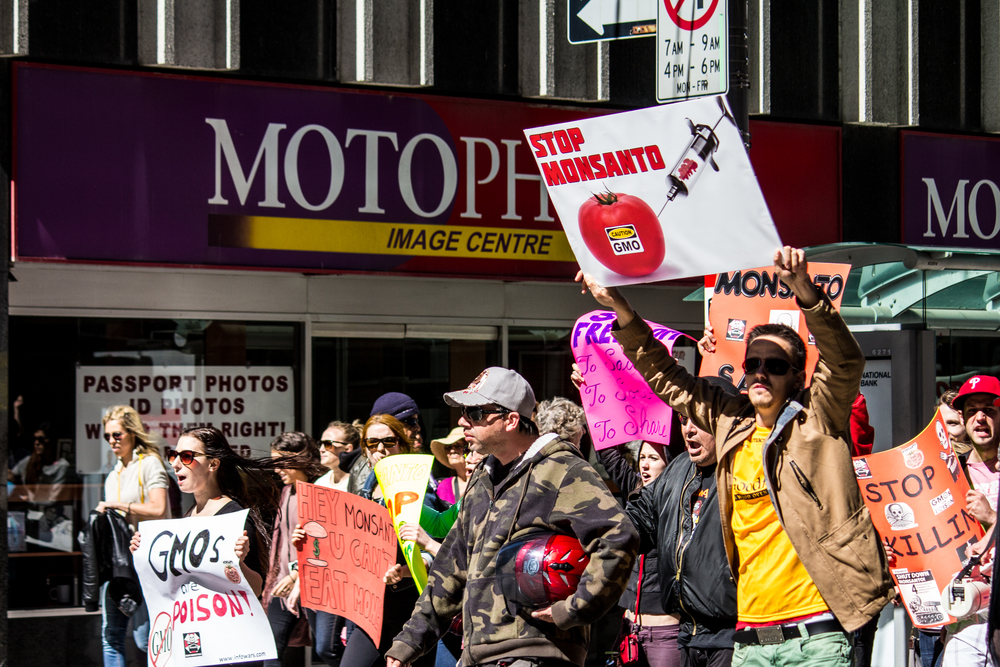 Demonstrators block traffic as they march down King Street in Toronto in protest of GMO foods and agricultural biotech giant, Monsanto.