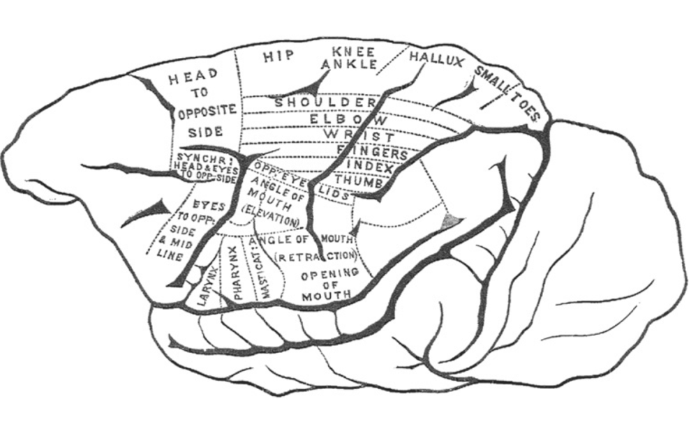 Original Motor Cortex Map