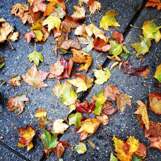 fall leaves, cool breeze warm heart to a Thanksgiving start #gratitude #evermorethanks
