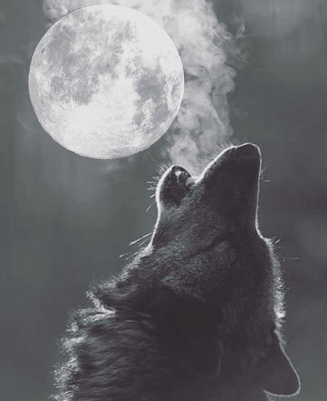 Wolf wisdom for the full wolf moon light centered