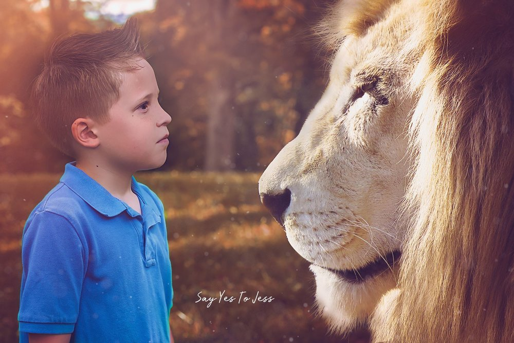 Brave little boy meets a lion in his Dream Session by Say Yes To Jess in Cincinnati Ohio