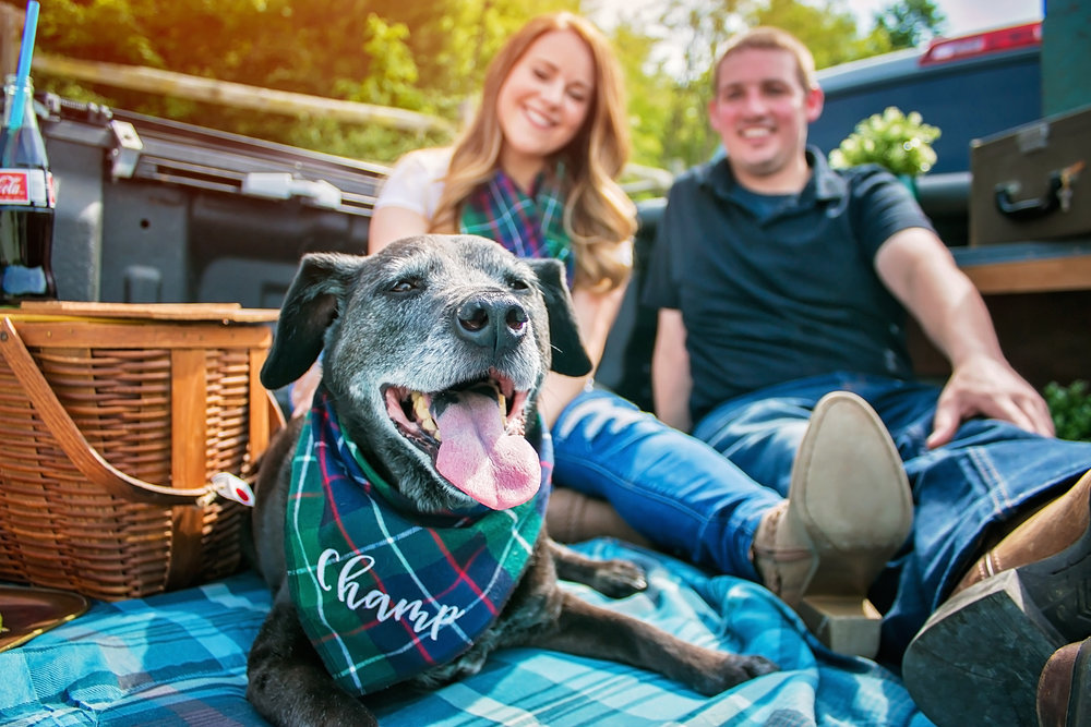 Pet Photography  Cincinnati Ohio styled Photoshoot Say Yes To Jess Photography