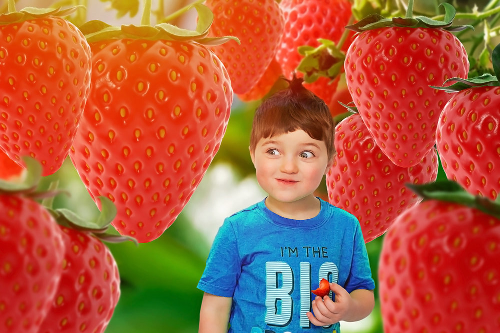 Berry field.jpg