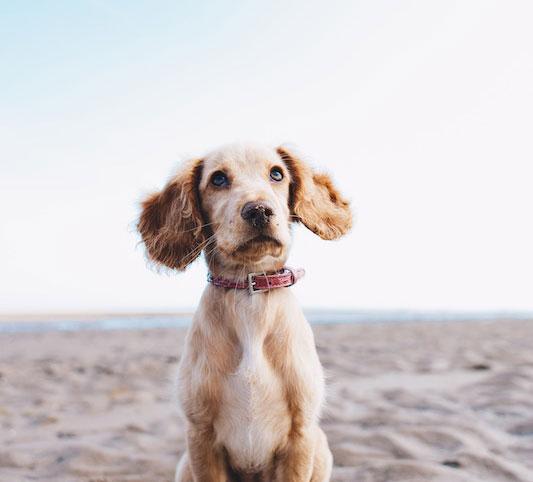 02 - my dog