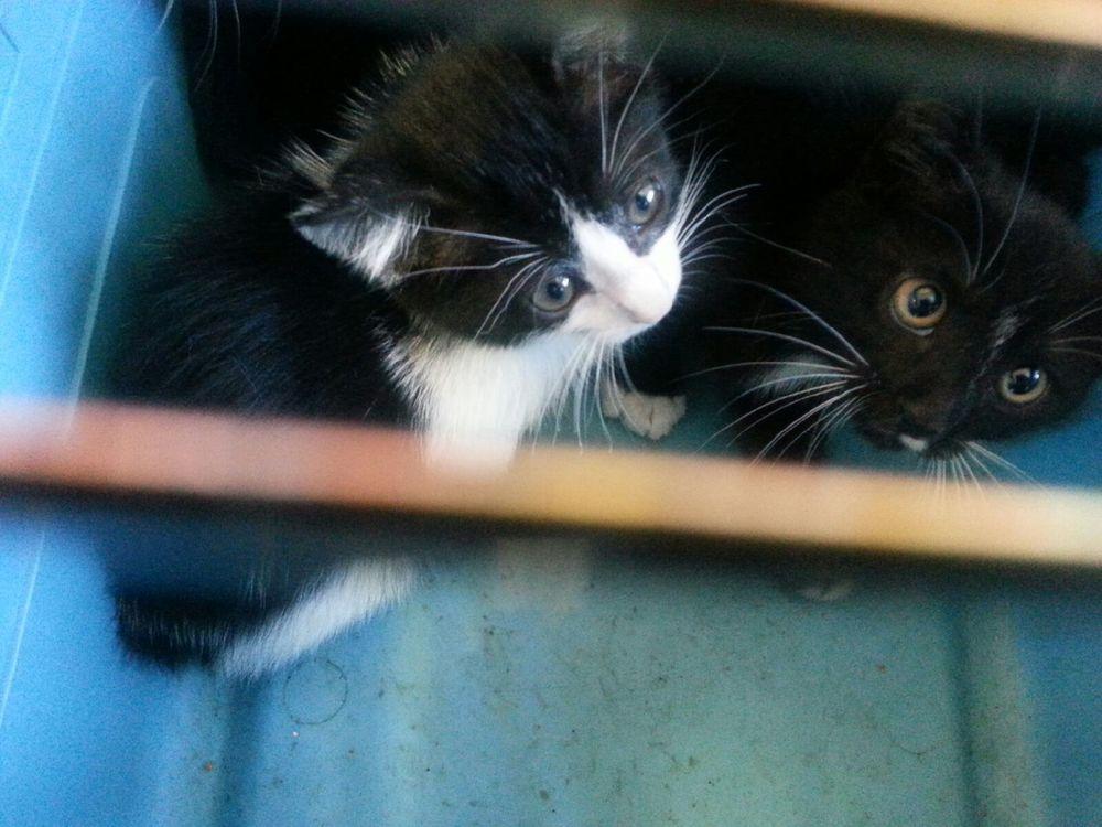 West LA kittens