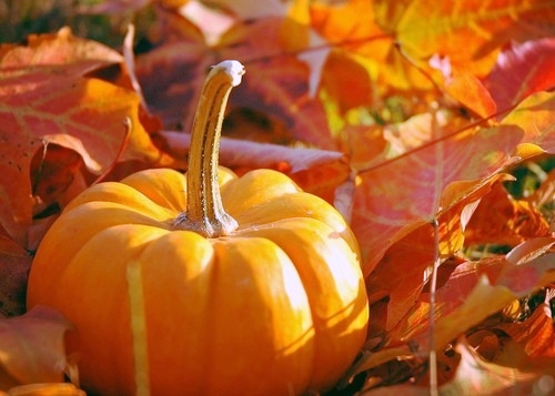 Click here to read our favorite things about Fall!