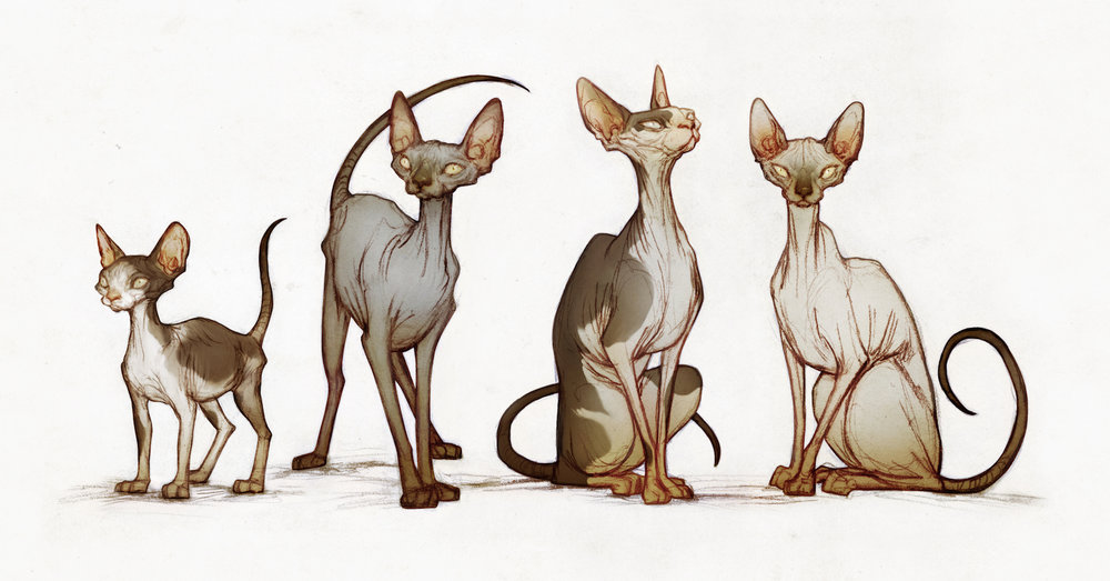 illustration_4cats.jpg