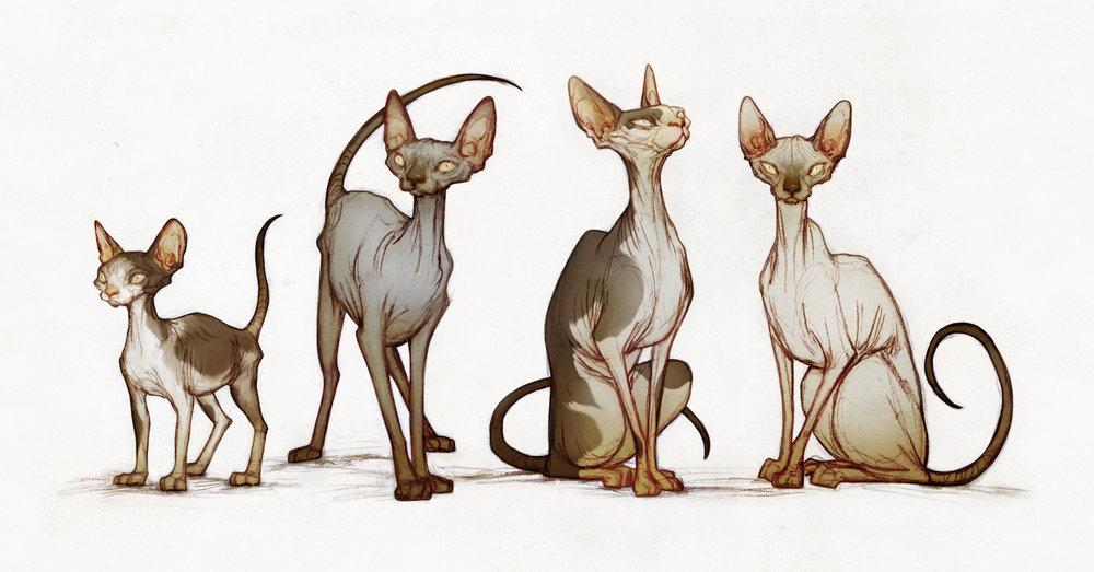 illustration_4cats.jpg