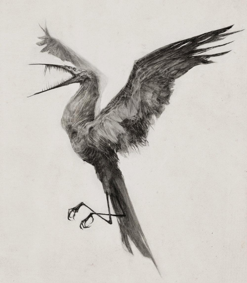 illustration_hungerbird.jpg