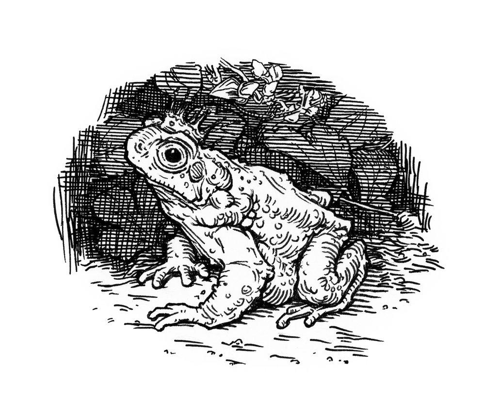 illustration_frog.jpg