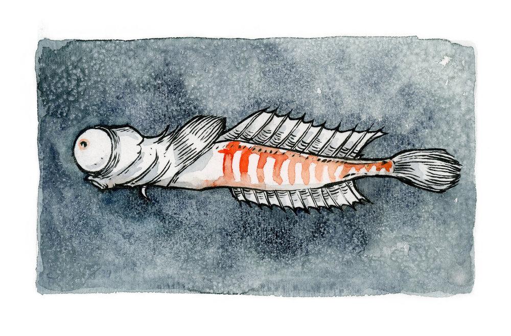 illustration_eyefish.jpg