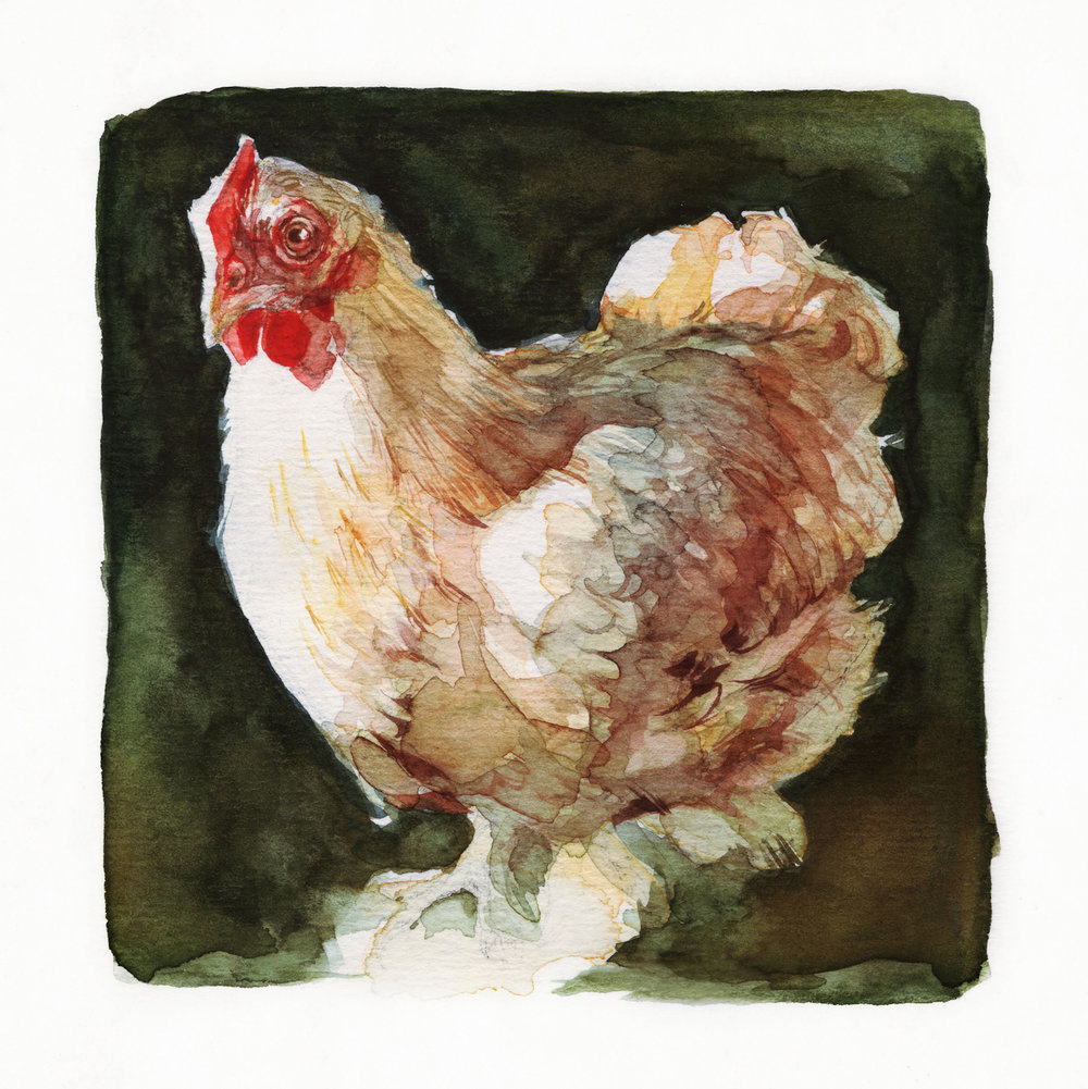 sketchbook_chicken.jpg