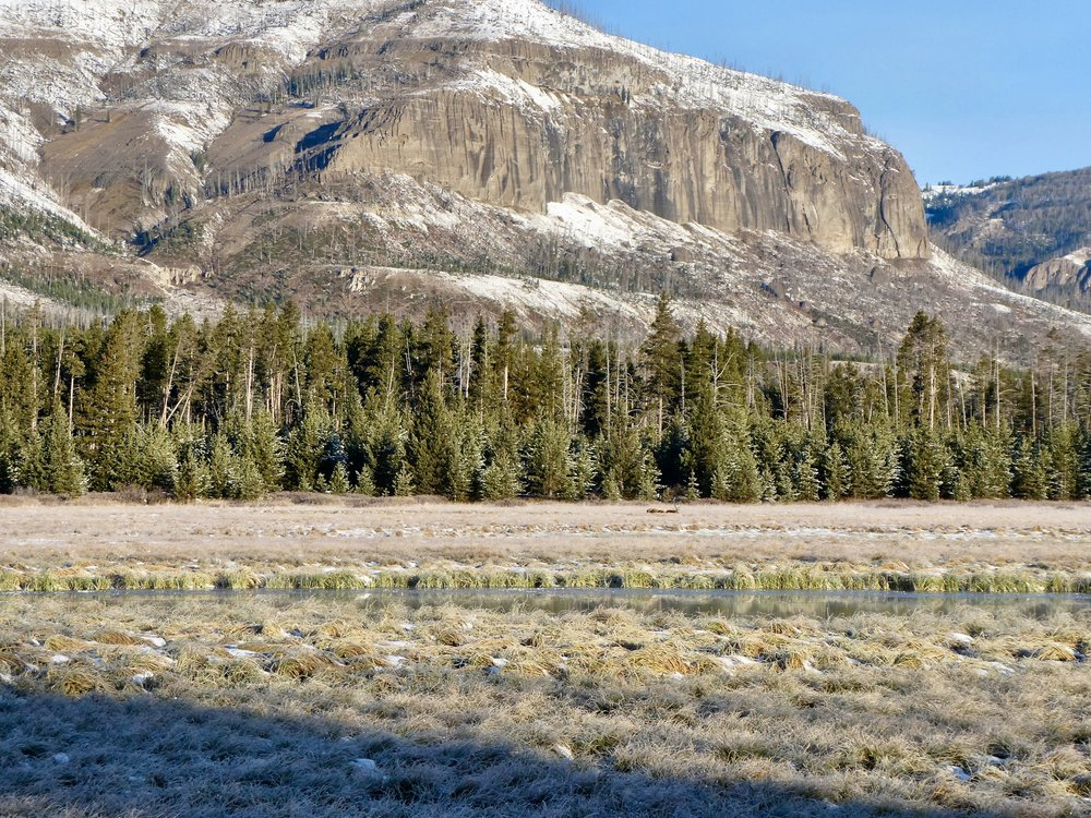 Ben makes a great shot, you can barely see the elk across the Yellowstone River, lying in the meadow