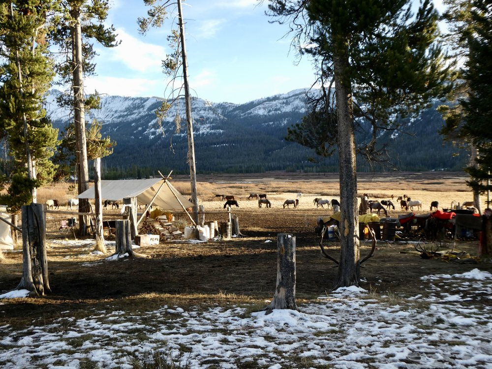 View from camp on our last day: horses grazing unafraid, while a grizzly feeds on the other side of the valley.