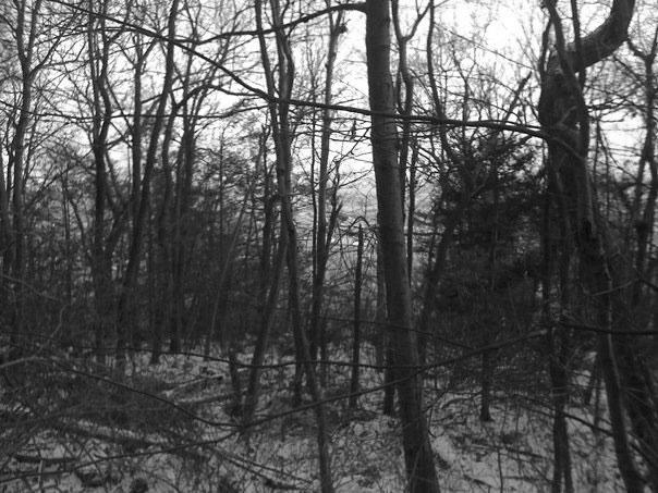 Appalachian-Trail_Hunter Gatherer